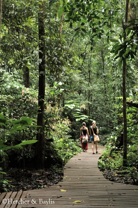 Trails at Mulu National Park