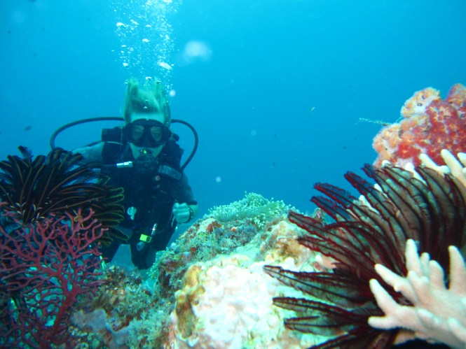 Mantanani Diving, Corals
