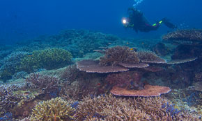 Dive at Mantanani Island