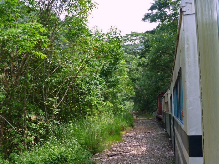 Train going through rainforests and villages