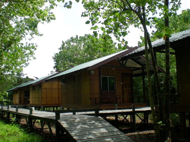 Agamid Chalet, Nature Lodge Kinabatangan. Civer Cabins are much smaller.